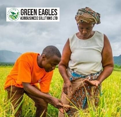 Green Eagles Agribusiness Solution